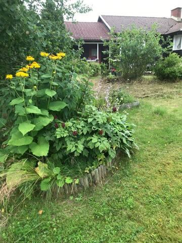 njut av trädgården