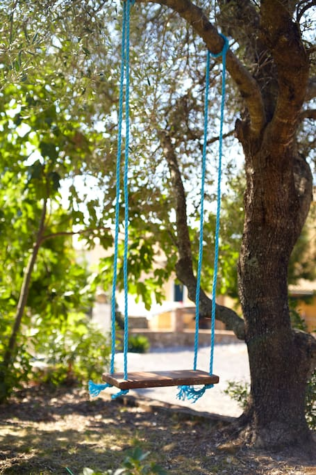 Swing in shaded area under the olive tree
