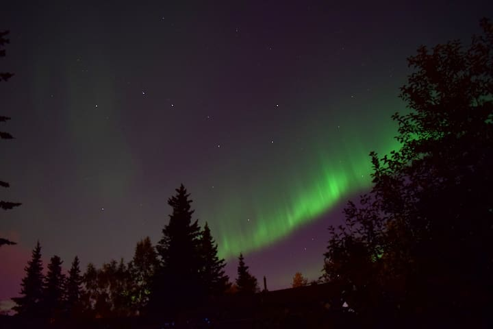 Northern Lights from our backyard. (Our Place)