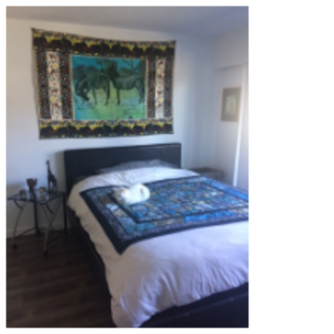 Main Room & Kitty Ambassador