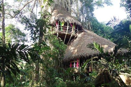 la maison du banian - Port Vila