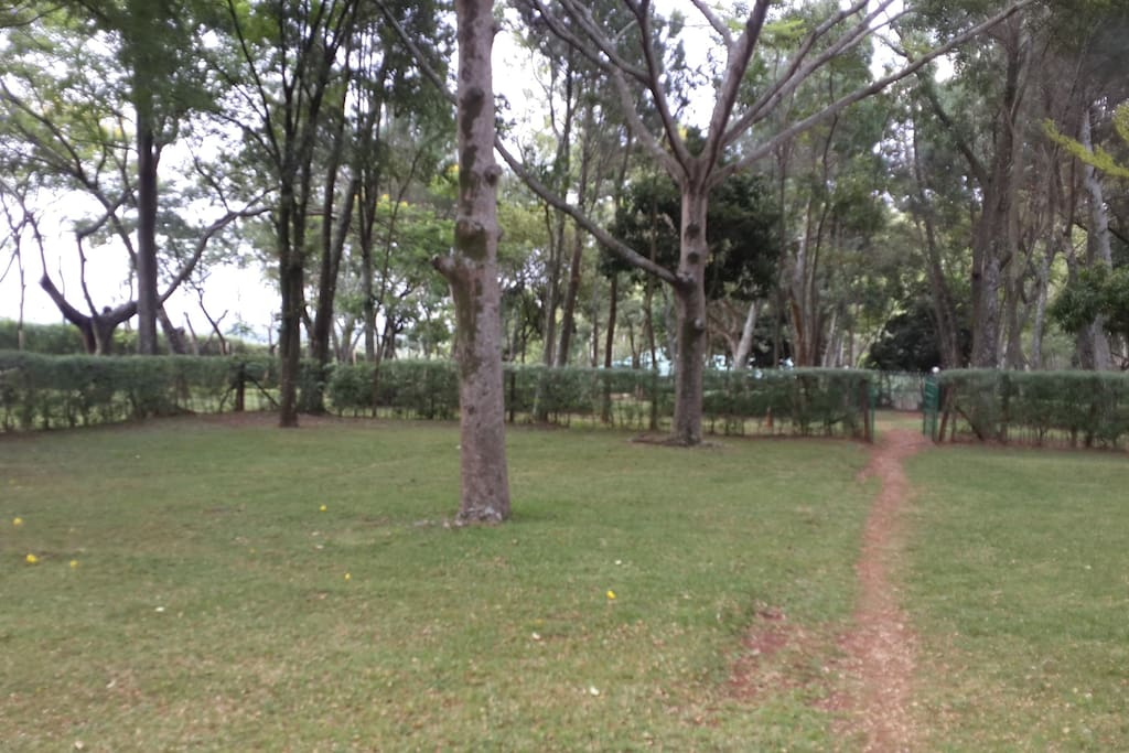 The compound is surrounded with trees, and the occasional wildlife (monkeys)  and Spacious area for walking, playing or events.