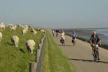 Texel, fiets eiland bij uitstek.
