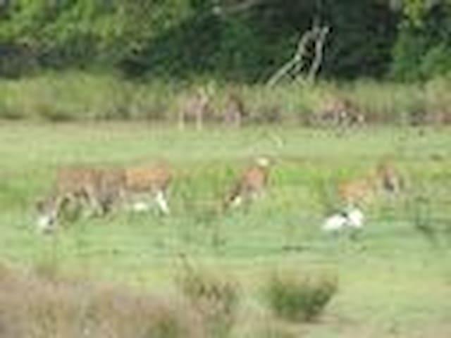 Wilpattu - Thimbiriwewa Ecoresort