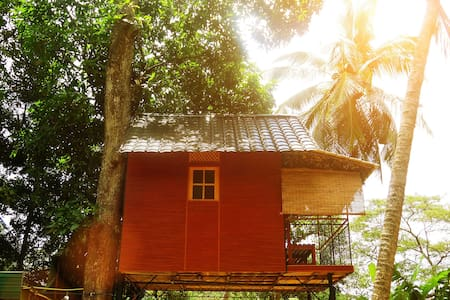 Tree House is made with lush bamboo and timber earthen wall and ground; worth a visit and stay off the beaten track that is perfect for birds watching and seclusion.