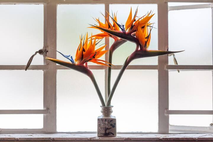 Oru National flower