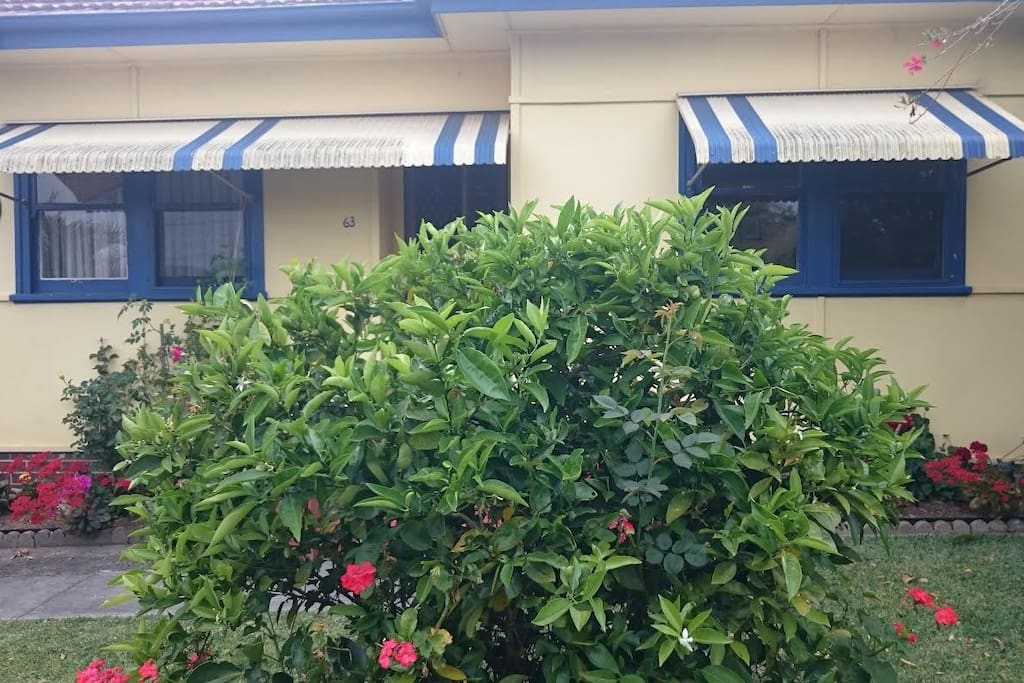 Front of house and my orange tree