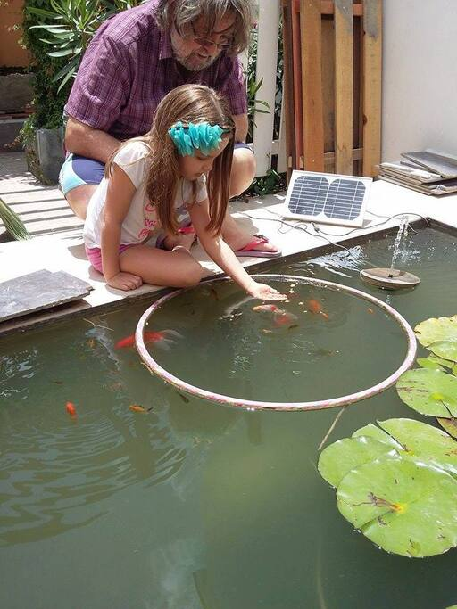 Back garden Fish pond.