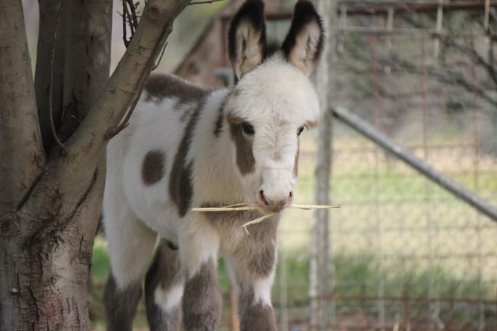 Donkey Tales Farm Cottages- Duffy's - Daisy Hill - Chatka w górach