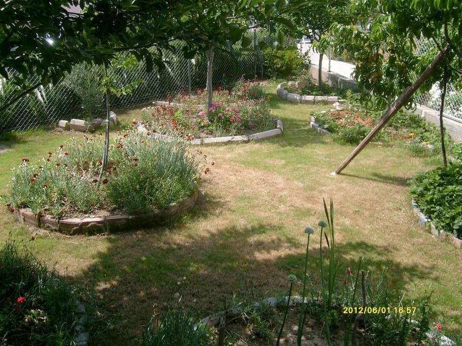 Ön bahçesi çim ve ağaçlık