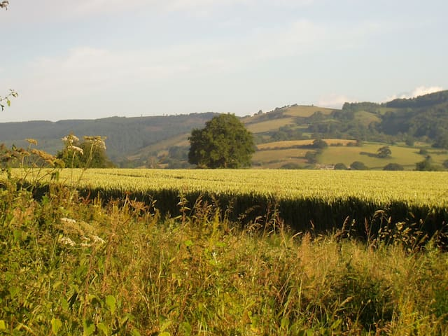 Early morning light across arable fields a back of the house