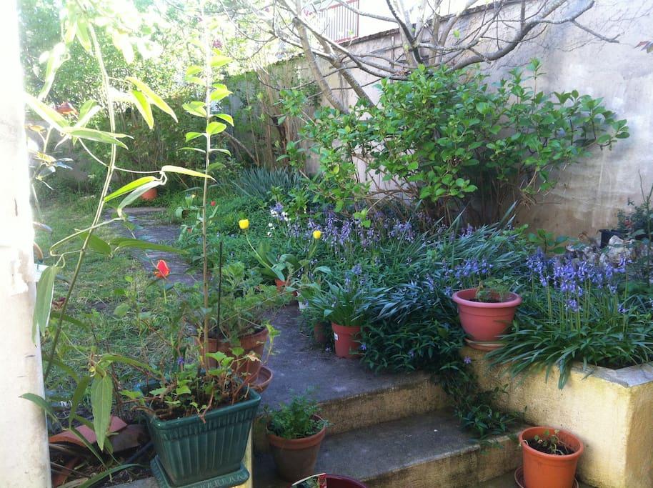 Vue sur le jardin au printemps