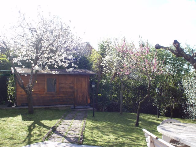 VIEW OF THE GARDEN, CHERRY BLOSSOMS
