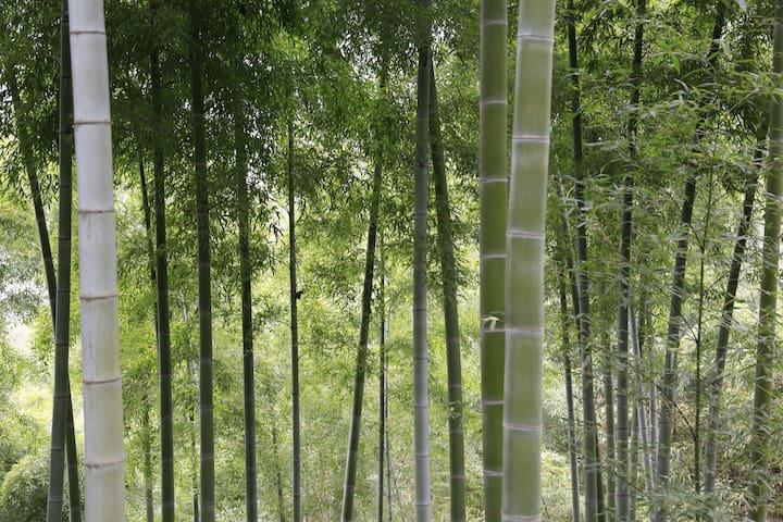 库区竹海边的民间手艺人之家---怡心居 - Huzhou