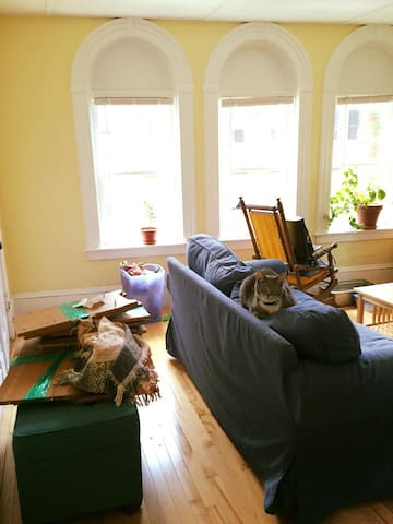 Living room (messy, apologies) but cute cat; good sun in apartment