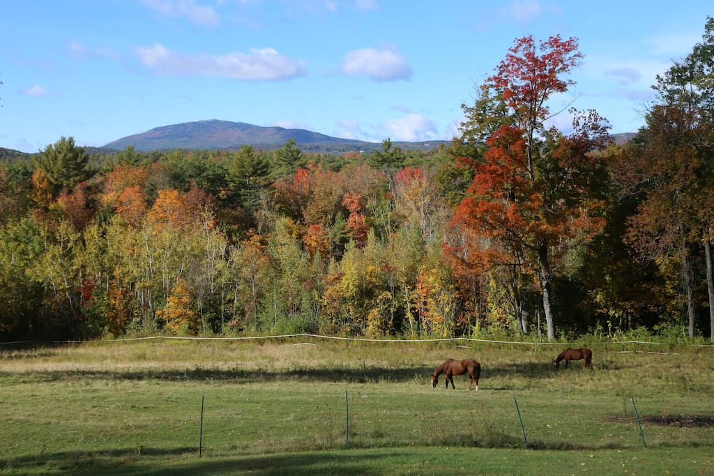 Horses grazing in Pasture with Grand Monadnock behind