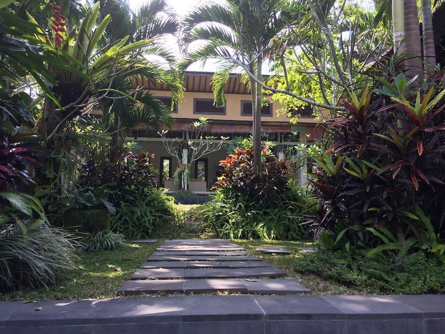 Our lush garden.