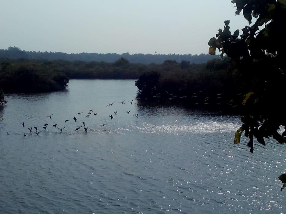 Migrating Birds View