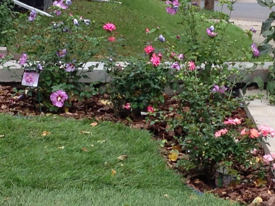 Flowers in your pretty front yard