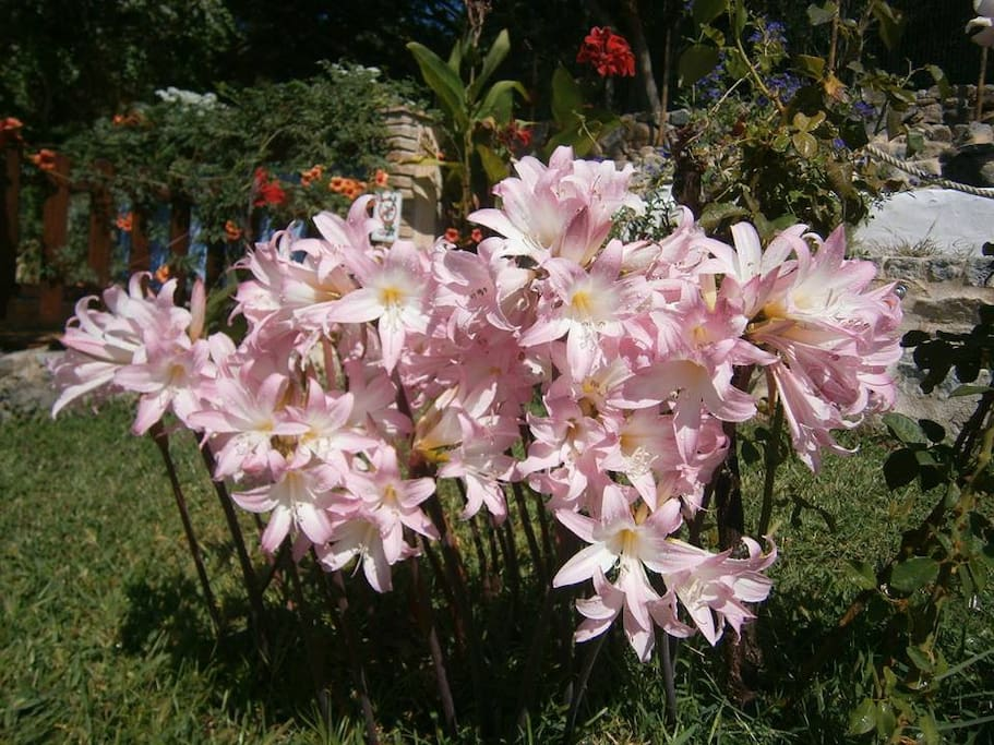 jardim, flores espontâneas