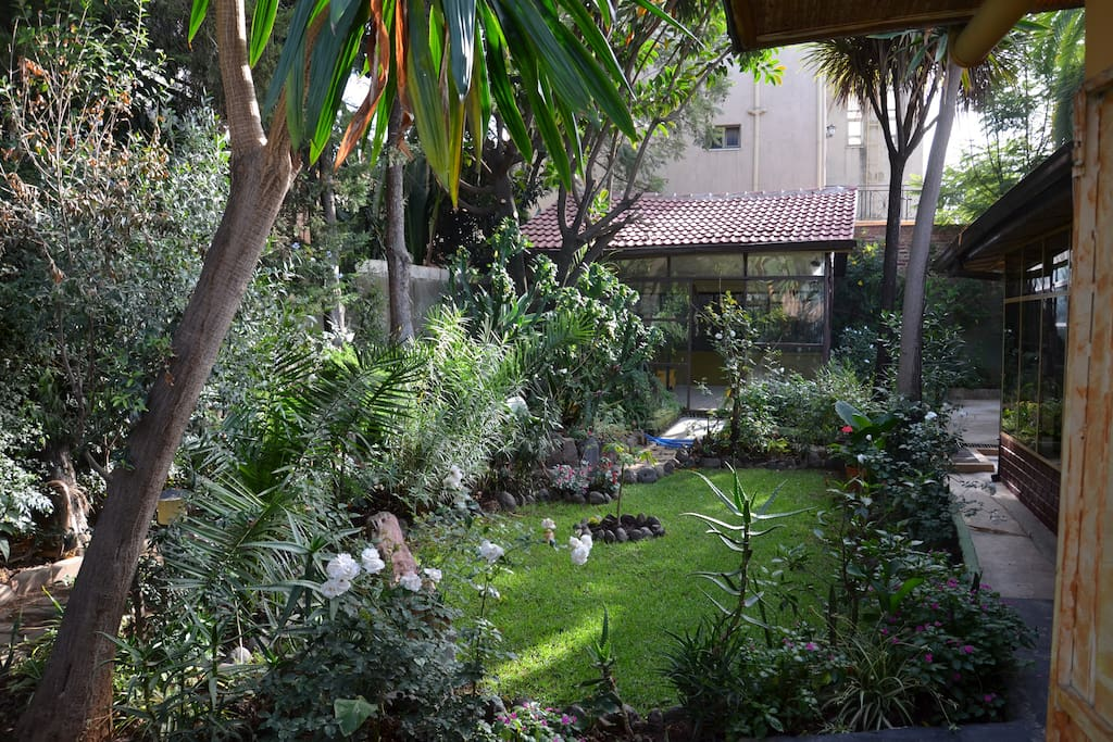 Garden and outdoor glasshouse.
