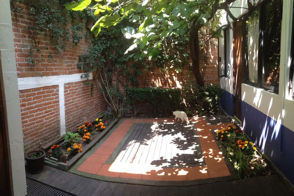 Little garden with fig tree. El pequeño patio con la higuera.