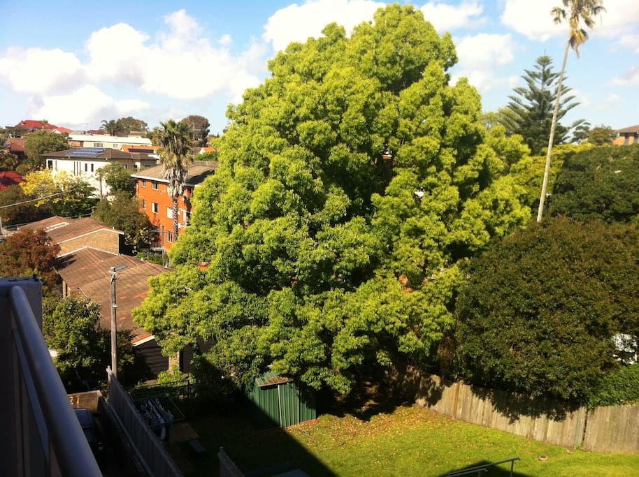 view from our terrace. magnificent trees and very green and quiet