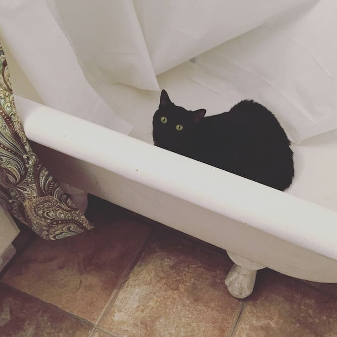 Cosmo likes to hang out in the clawfoot bathtub.