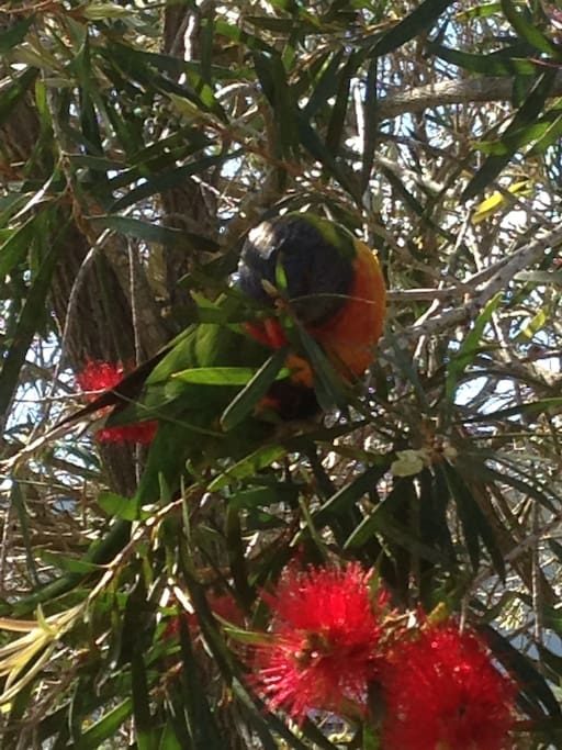 Beautiful bird life attracted to the native plants in the yard