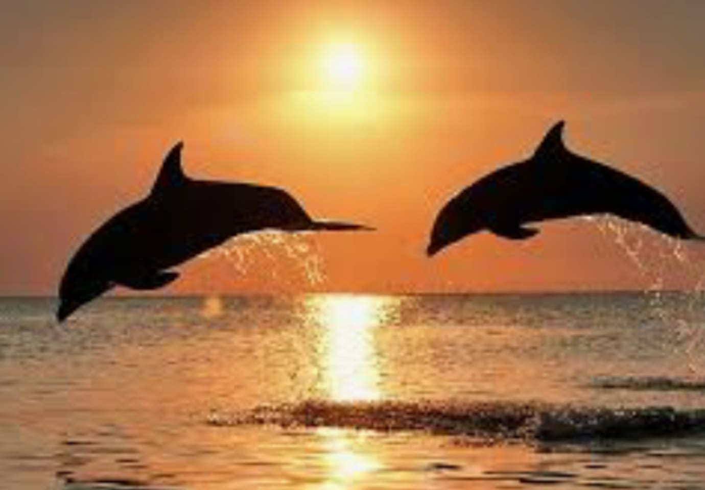One free Dolphin tour ticket for each night booked. Book 3 nights - get 3 free tickets worth a total of $150