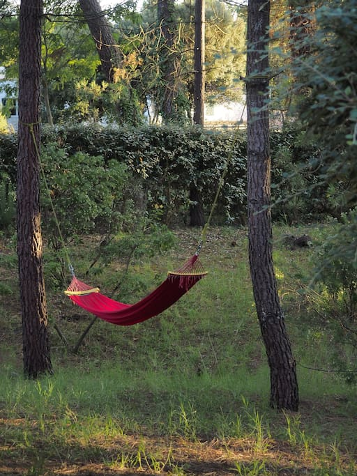 Hamac sous les pins