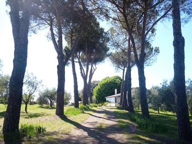 Artist's Panoramic Country Home near Rome