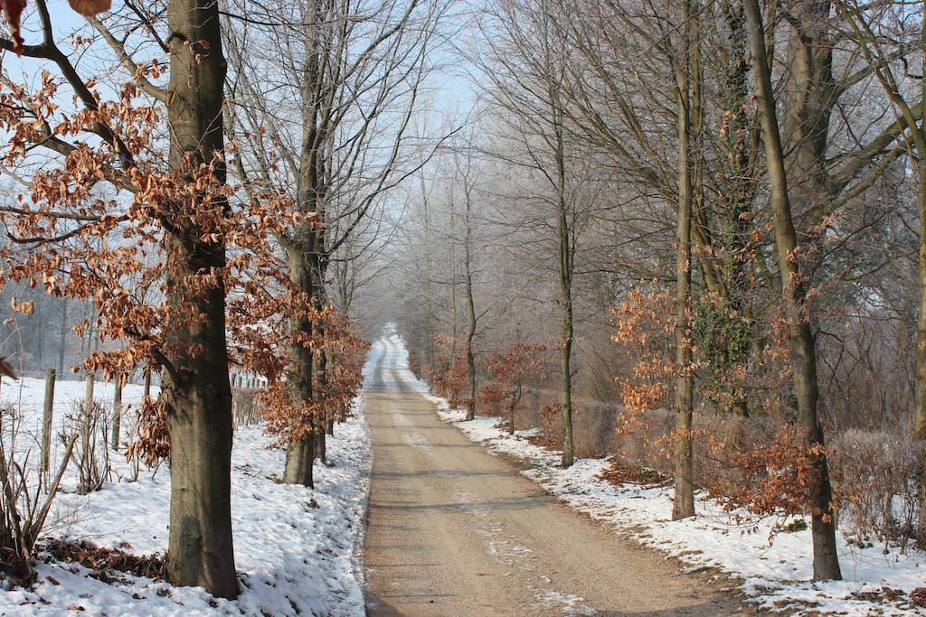 The entrance lane during winter