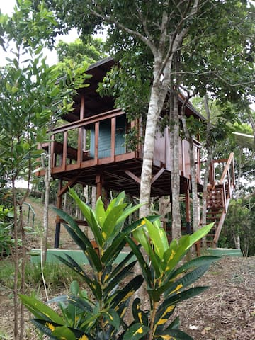Lake Carite Treehouse