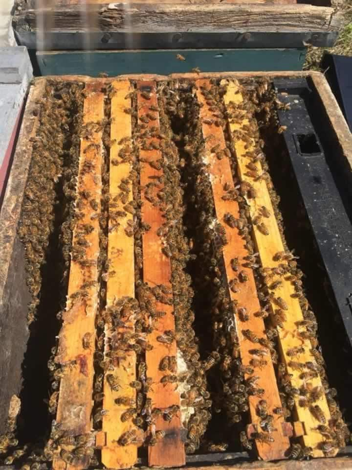 Closer look into a production hive