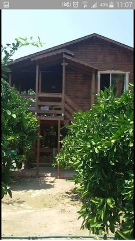 Wooden house - Güzelbahçe - Bungalow