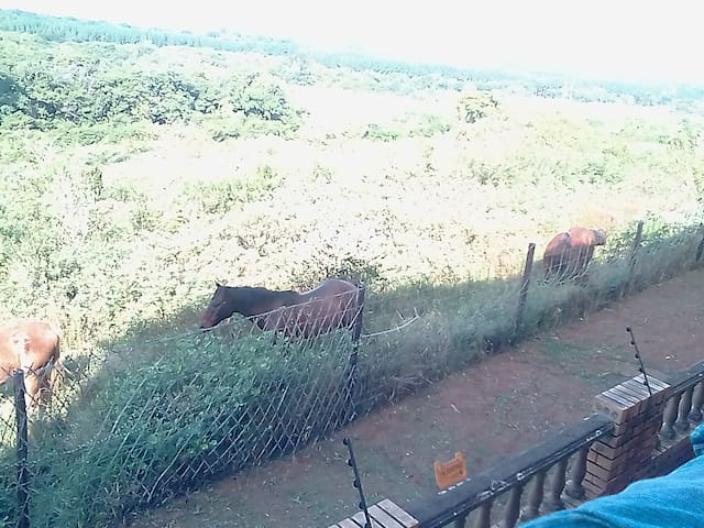Horses roaming free in the veld in front of the house