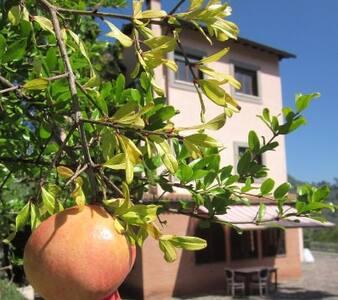 """""""IL CASONE"""" - VALLE DELL'ANIENE  - Anticoli Corrado - House"""