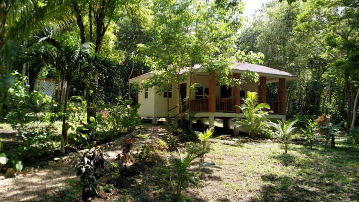 Monkey Falls Jungle Cabin #2 w/ AC, kitchen & WIFI
