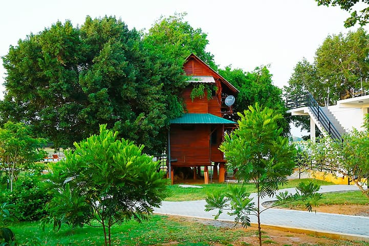 Tree House - Weligatta - Bed & Breakfast