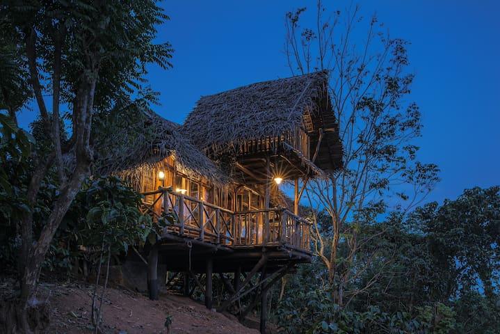Hornbill Treehouse at Aranyakam's coffee estate