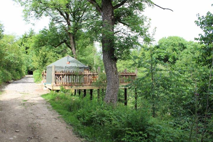 Tree house view Yurt