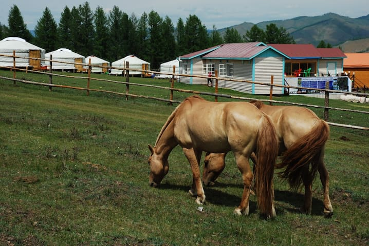 Mongolia Horse Riding Club - Terelj