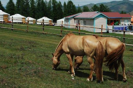 몽골승마클럽 여행캠프 - Terelj - Khemah Yurt