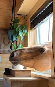 Country Bunky on a Horse Acreage
