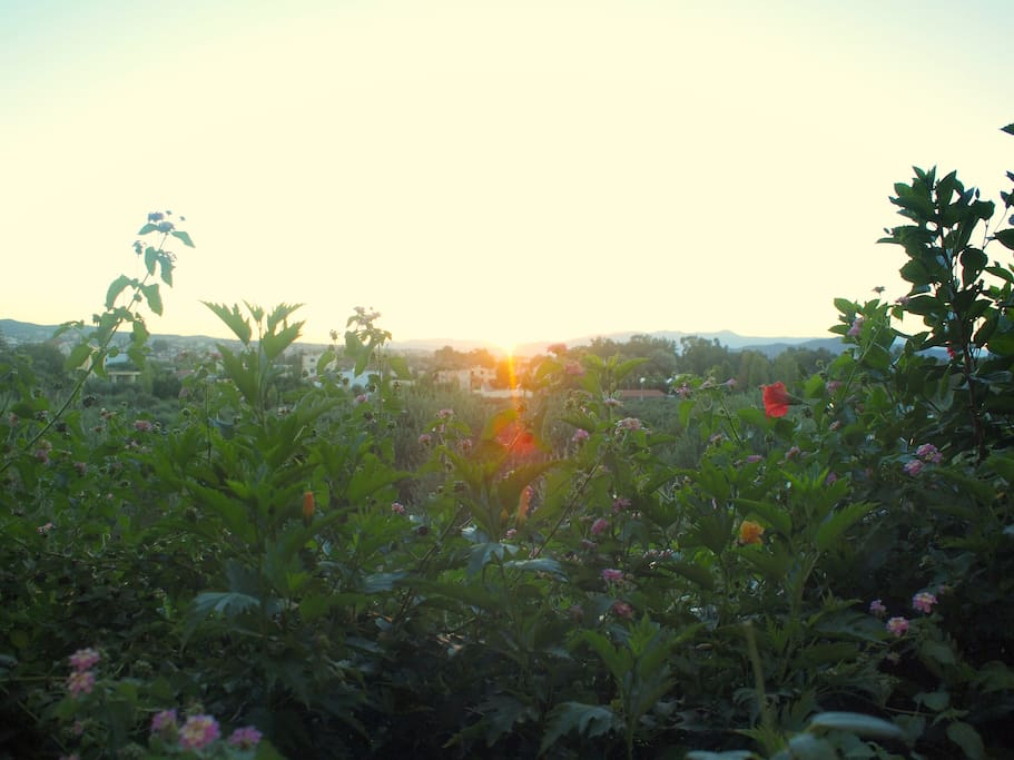 sunset view from the yard