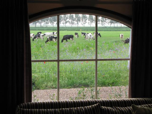 Luxery Polder Cottage  - Woubrugge - Huis