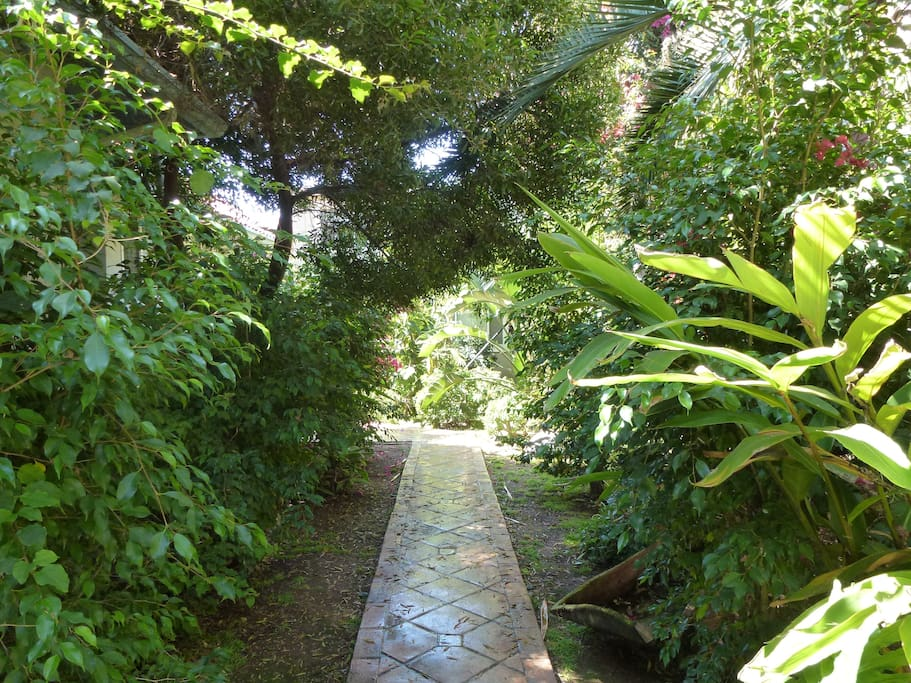 The garden walk into the property