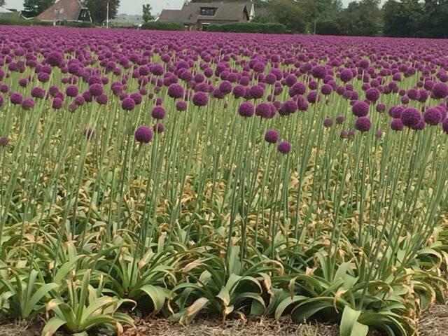 Nice flowers in a field