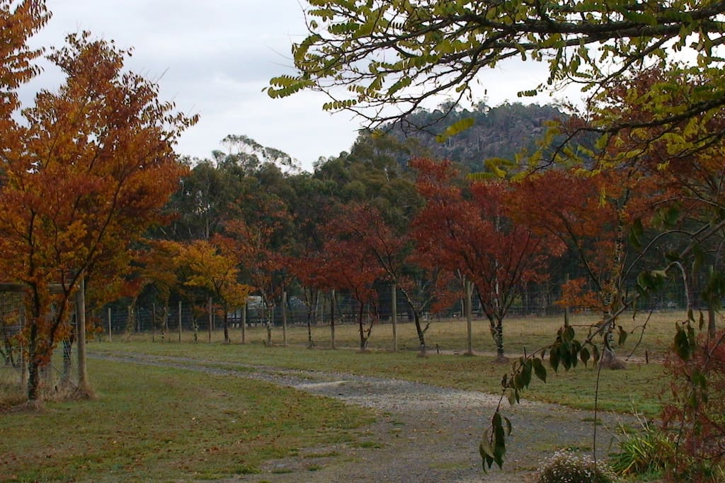 Autumn colour and Hanging Rock